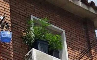 La Policía requisa dos plantas de marihuana colocadas en las ventanas de un piso en Valladolid