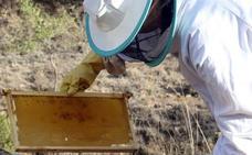 Los avisos para la retirada de enjambres se multiplican por doce en Segovia