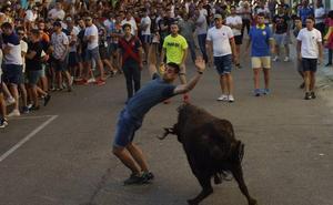 El Barrio Nuevo clausura con gran éxito su novedoso encierro con dos vacas