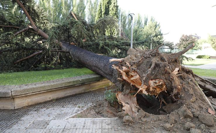 Daños de la última tormenta de granizo en la capital