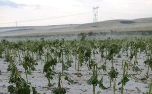 El pedrisco provoca daños en más de 60.000 hectáreas de cultivos