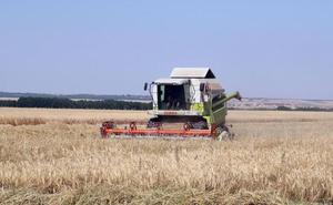 Los agricultores esperan una buena cosecha tras un año de meteorología atípica