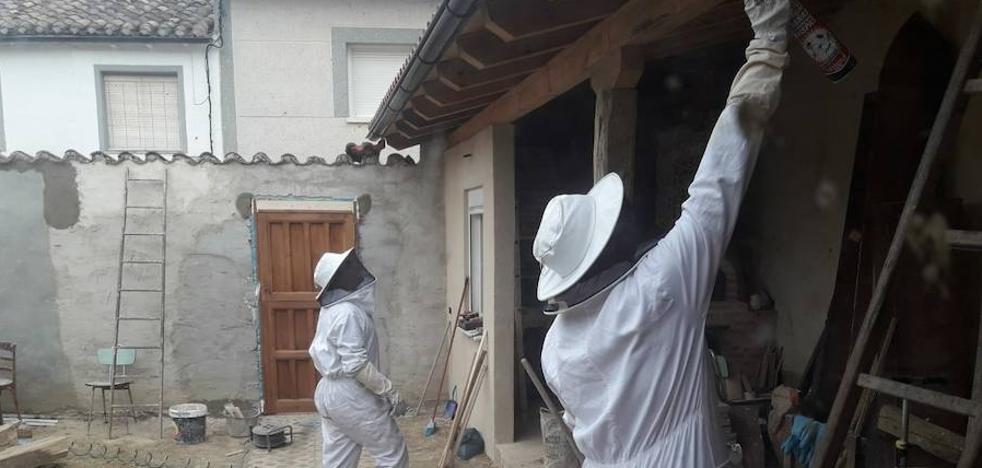 Retiran en San Mamés de Campos un enjambre de avispas asiáticas