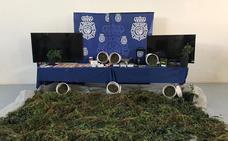 Once detenidos en Valladolid dedicados al cultivo de marihuna y distribución de droga