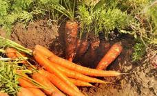 Zanahoria, con apellido local
