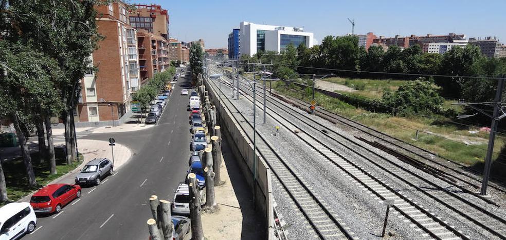 Poda radical en la avenida de Irún de Valladolid