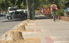 La tala de 36 árboles marca el inicio de la obra del túnel de Pilarica
