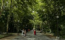 El Campo Grande tiene 150 árboles que requieren vigilancia por riesgo de caída de ramas