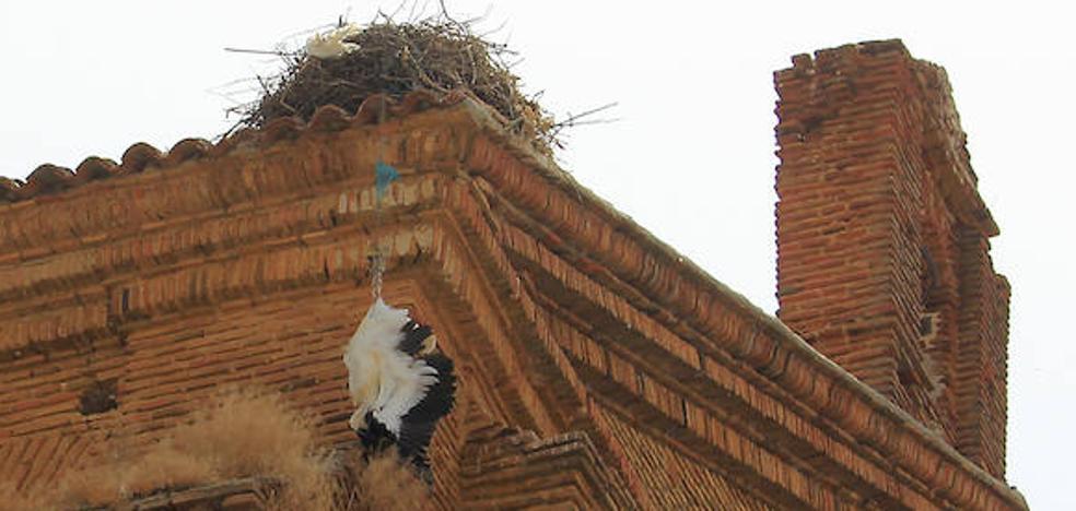 Una cigüeña agoniza varios días hasta la muerte tras enredarse en su nido en Palencia