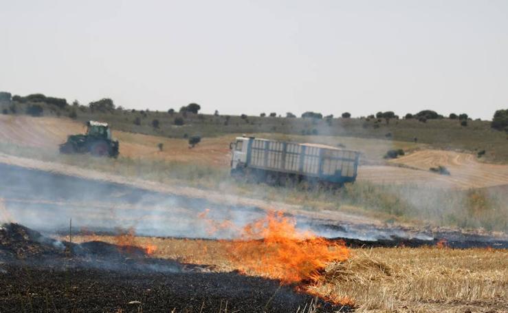 Un incendio quema varias hectáreas de cereal y monte en Vertavillo