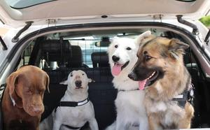 Estos son los métodos más seguros para viajar con nuestra mascota