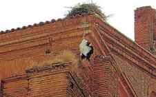 El rescate de la cigüeña de Frechilla enfrenta a los bomberos