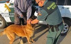 Investigado por la muerte de dos perros en el interior de un vehículo en el norte de Palencia