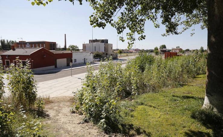 Proliferación de ratas en la zona de las casas de Abella en Palencia