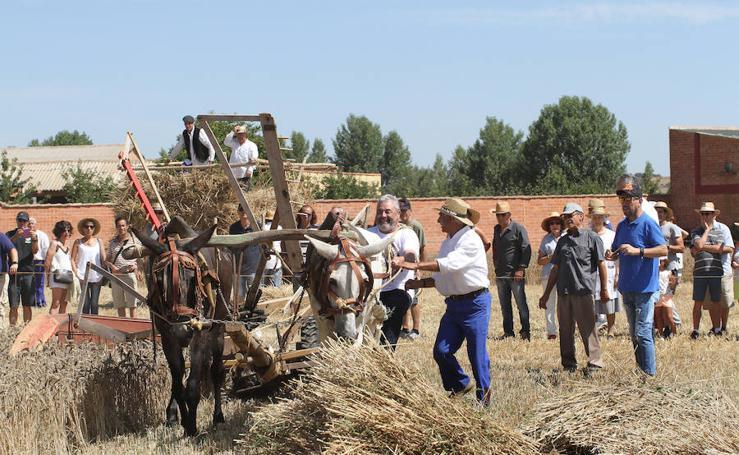 Fiesta de la Trilla en Castrillo de Villavega