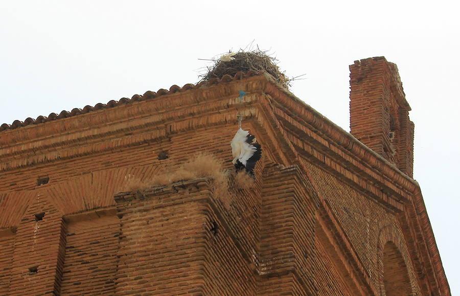 Denuncia en la Fiscalía por dejación de funciones por la cigüeña muerta en Frechilla