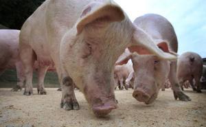 Cuerda del Pozo acoge a más de 500 vecinos de Cidones, Ocenilla, Villaverde y Herreros en contra de la construcción de la granja porcina