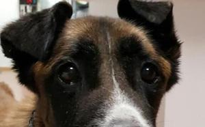 Fallece un perro rescatado de la perrera municipal en estado de desnutrición