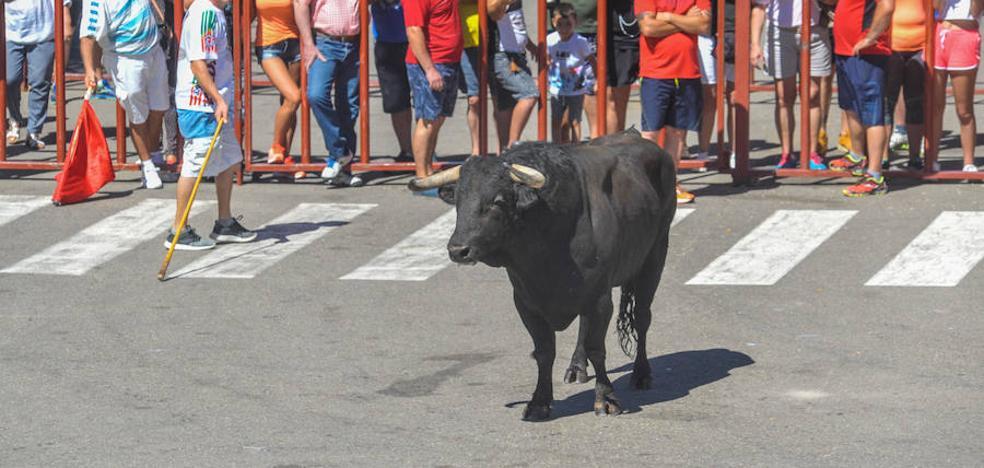 Rueda repartirá 300 litros de verdejo después de la suelta del principal toro de sus fiestas