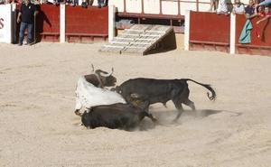 Muere un toro en el desencajonamiento de esta tarde en Peñafiel