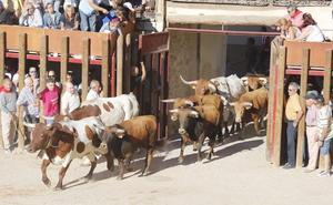 Peñafiel inicia las fiestas patronales con un multitudinario encierro