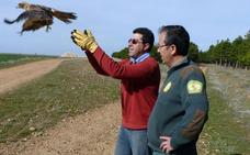 112 animales retornan a la naturaleza tras recuperarse en Segovia