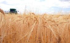 Los agricultores de Castilla y León confían en que la cosecha de cereal sirva para recuperar las pérdidas del año pasado