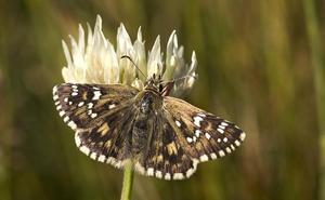 Las mariposas vuelven a ser protagonistas en Ávila