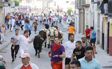 Los toros se enseñorean de Peñafiel