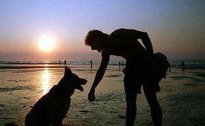 ¿Deberían poder bañarse los perros en las playas?