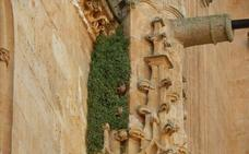 Defensa del Patrimonio pide acabar con las humedades y la vegetación de la Catedral