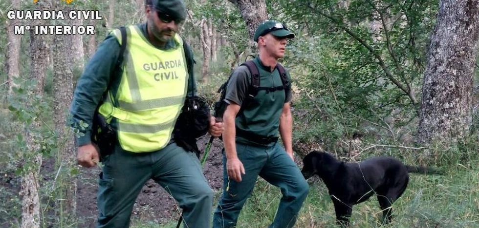 La Guardia Civil intensifica con perros de rescate la búsqueda del hombre desaparecido en Areños