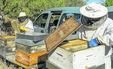 Más de 140 apicultores trashumantes llegan este verano a Valladolid desde el sur del país