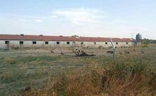 La plataforma de Fuentepelayo denuncia la muerte de un caballo por desnutrición