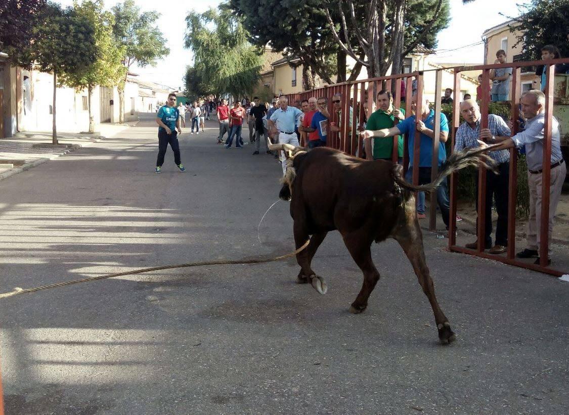Programa de las fiestas de Villafrechós 2018