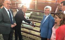 La granja Tablares participa en la Feria Salamaq con 8 ejemplares ovinos