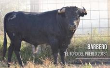 'Barbero', el primer Toro del Pueblo de Astudillo que no estará enmaromado