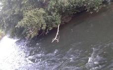 Rescatado un menor de edad atrapado en unas ramas de un árbol en el río Carrión en Saldaña