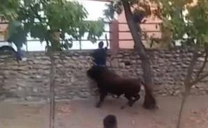 Vídeo: Herido un varón al recibir una cornada en el encierro vespertino de Tordesillas