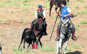 El encierro en Arrabal de Portillo deja dos caballos heridos por cornada