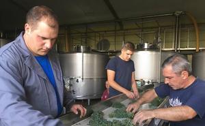 Liberalia comienza la vendimia 2018 con las uvas verdejo