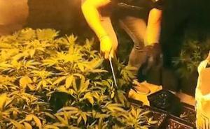 Dimite un concejal de Granada al que pillaron con 355 plantas de marihuana en su propiedad