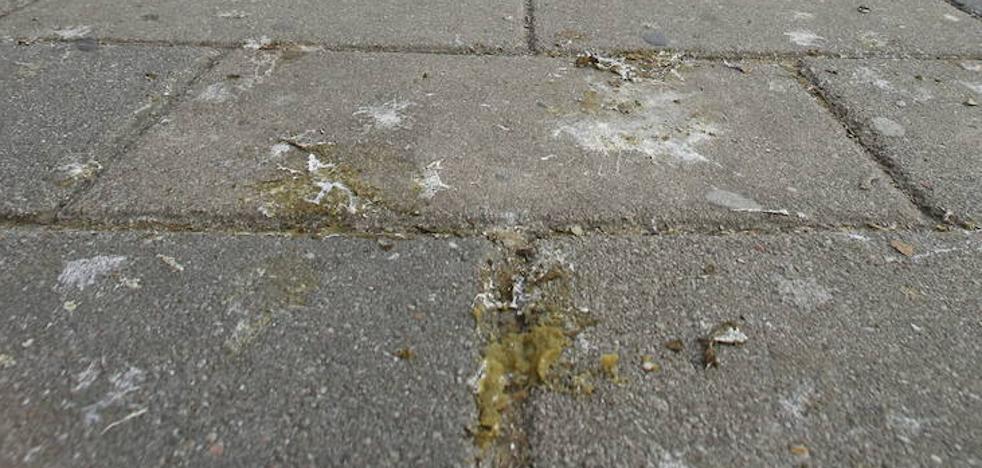 La retirada de 383 nidos de paloma torcaz palía la suciedad por excrementos en las calles de Valladolid