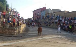 Emoción y valor en la primera suelta de la vaca enmaromada de Palazuelo
