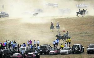 Cientos de personas siguen el encierro campero de Palazuelo