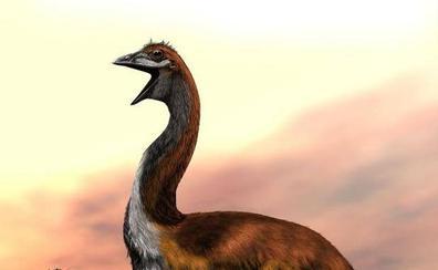 Los científicos zanjan el debate, Vorombe es el ave más grande de la Historia