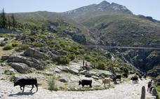 Castilla y León lidera las mínimas nacionales con heladas en varios puntos de la comunidad