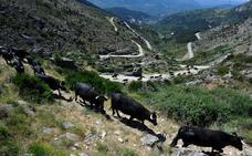 Castilla y León registra por tercer día consecutivo la temperatura más baja de España