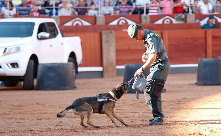 Exhibición de la Guardia Civil en la Plaza de Toros de La Glorieta de Salamanca