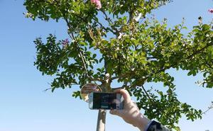 El Ayuntamiento de Carbajosa inicia el proyecto de señalización de los árboles del botánico
